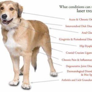 Softlaser therapie voor dieren